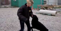 2014 Military May: Miss Rodeo America vs. Military Working Dog
