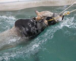 The Bull Pool