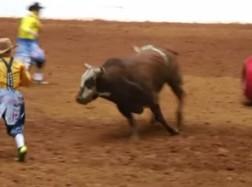Bull Attacks Fort Worth Clown in the Barrel