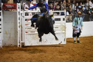 "Wednesday Night PRCA Xtreme Bulls ""Bulls' Night Out"""