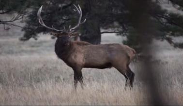 Elk Country Chronicles – Elk Restoration