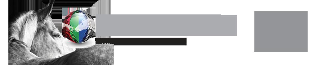 Dennis Reis logo banner