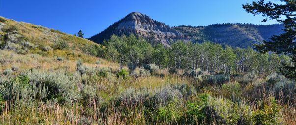 RMEF Grants Benefit Utah Wildlife Habitat, Research