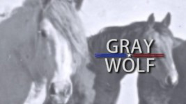 2016 ProRodeo Hall of Fame Induction Ceremony: Gray Wolf