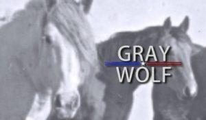 Livestock: Gray Wolf