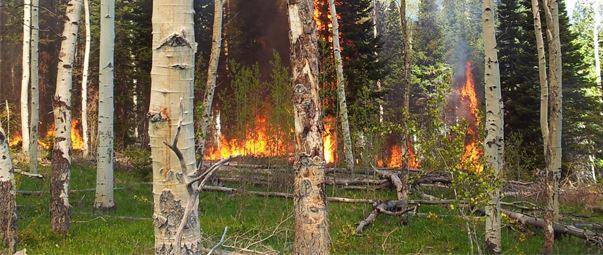 rmef-funding-bolsters-montana-wildlife-habitat-research