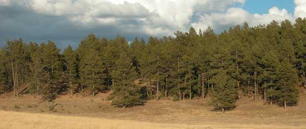 improvements-coming-to-south-dakota-elk-country