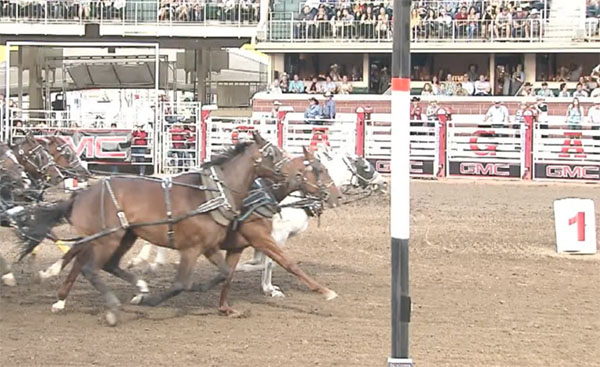 Chuckwagon Victory By Inches At 2017 Calgary Stampede