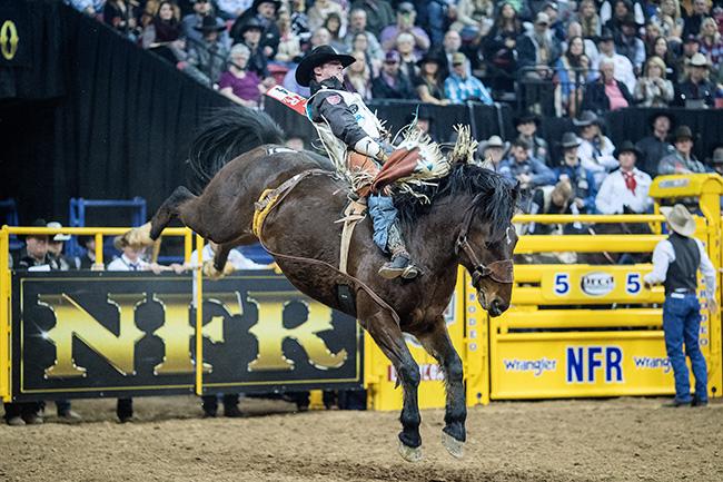 aaee57ea57aa7 Champion Finds Comfort in Rank Horse