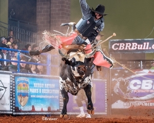 Navajo Bull Rider Seizes Cbr Bull Riding Number One Ranking