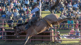 Brown Enjoys His Biggest Moment in Rodeo