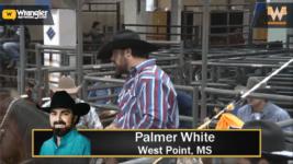 Palmer White's Horse