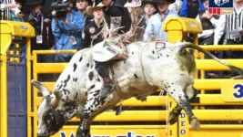 Bull Rider Clayton Sellars Recovering from Early Season Injury
