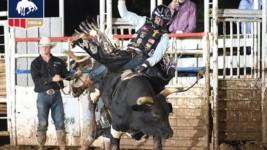 Bull Rider Daylon Swearingen on a Hot Streak