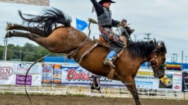 Stock in the Rodeo World