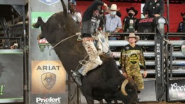 Road to Arlington: Campbell Closing in on Qualifying for Both PBR World Finals and NFR