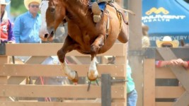 Rutherford Ready for Wrangler NFR Tango