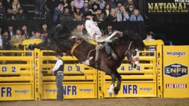 Champion Eyes Rodeo's Gold