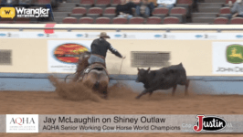 AQHA Senior Working Cow Horse Highlights