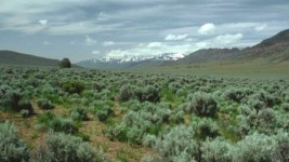 RMEF, Partners Contribute Nearly $300,000 to Benefit Nevada Elk