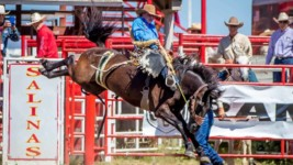 111th California Rodeo Salinas Postponed to September 23-26, 2021