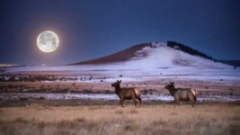 New Mexico Elk Migration Corridor Protected, Opened to Access