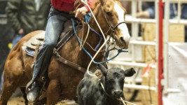 Top Notch Athletes Head to the San Antonio Stock Show & Rodeo Finals After Second Semifinals